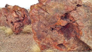 Close up view of petrified logs